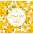 daffodils background vector image vector image