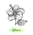 hand drawn hibiscus flowers floral background vector image