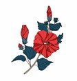 hibiscus red flowers branch vector image