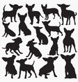 chihuahua silhouettes vector image