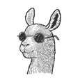llama in sunglasses sketch vector image vector image