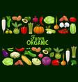 vegetables organic farm veggies greenery vector image vector image