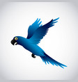 blue macaw design vector image vector image