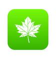 maple leaf icon digital green vector image vector image