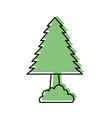 pine tree forest natural flora foliage vector image vector image
