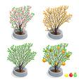 Trees in pots vector image