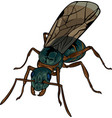 cartoon winded ant vector image vector image