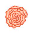 floral botanical flower pink ornament vector image