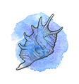 hand drawn seashell vector image vector image