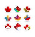 maple leaf logo vector image