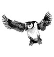 puffin bird doodle hand drawn vector image