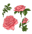 set coral roses hand drawing vector image vector image