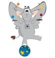 Elephant juggler vector image