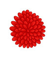 floral botanical flower color ornament red vector image vector image