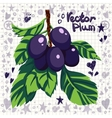 fresh plums with leaves vector image vector image