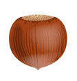 full unpeeled realistic hazelnut close up vector image