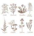 set of medicinal plants vector image vector image