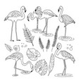 set of flamingo images vector image vector image