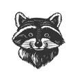 raccoon head engraving vector image