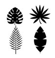 tropical palm monstera leaves icon isolated on vector image
