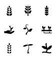 seedling icons vector image vector image