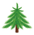 beautiful green spruce vector image