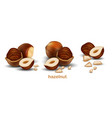 hazelnuts on a white background 3d high vector image vector image