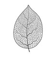 leaf vein texture isolated transparent vector image