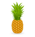 pineapple isolated vector image
