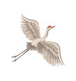 red-crowned crane flying with wide open wings vector image
