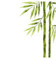 watercolor bamboo stem with green leaves and copy vector image