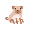 cute pug dog funny friendly animal pet character vector image vector image
