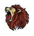 lion roaring logo design vector image