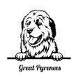 peeking dog - great pyrenees breed - head isolated vector image vector image