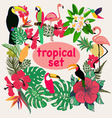Collection of tropical birds palm leaves and flowe vector image