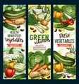 healthy green food vitamins farm vegetables vector image