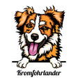kromfohrlander - dog breed color image a dogs vector image vector image