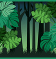tropical landscape trunks nature and palm leaves vector image