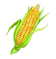 corncob hand drawn painted vector image vector image