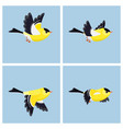 flying american goldfinch male animation sprite vector image vector image