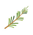 rosemary icon herbs and spices vector image