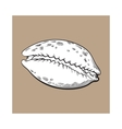 white cowrie or cowry sea shell sketch style vector image vector image
