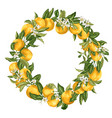 citrus orange tree ornament wreath with fruits vector image vector image