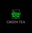 elegant green tea leaf leaves logo design vector image vector image