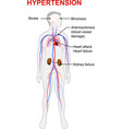 hypertension vector image vector image
