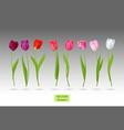 set tulips flowers vector image vector image
