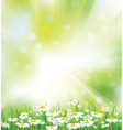 spring background flowers vector image