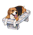 Beagle on chair vector image vector image