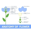 Detail of anatomy flower vector image