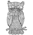 doodle of owl vector image vector image